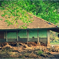 A Village Far Away