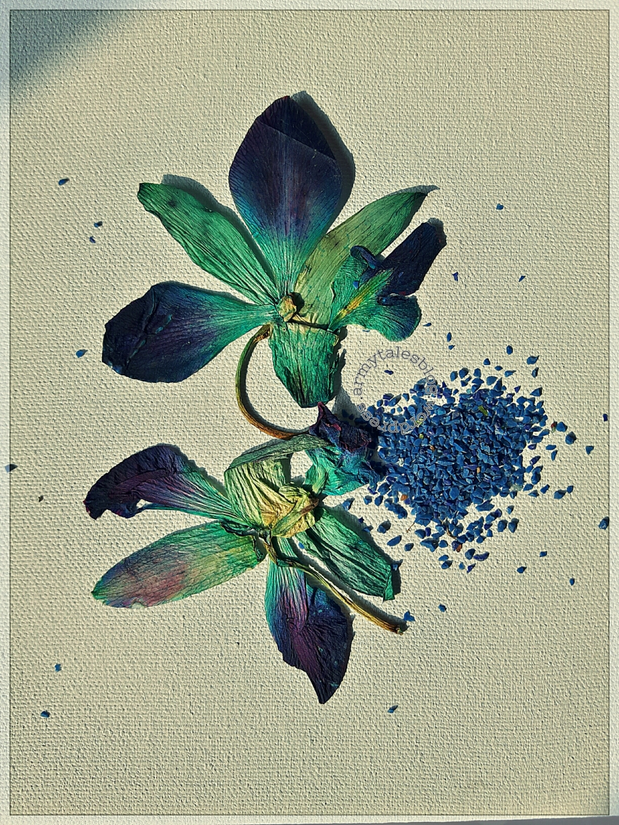 Do Withered Flowers Lose Their Beauty?